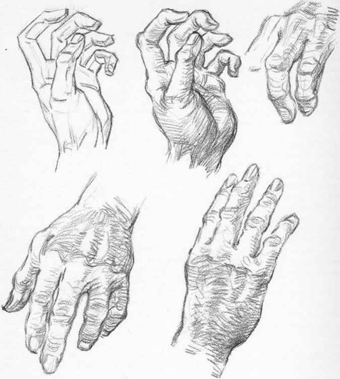 Drawing The Head Hands