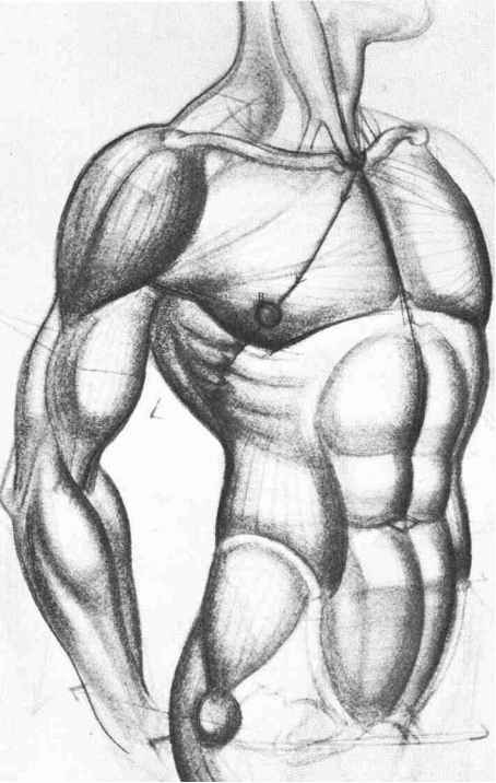 Frontal Male Torso Comic Art