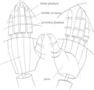 Proportions Fashion Hand