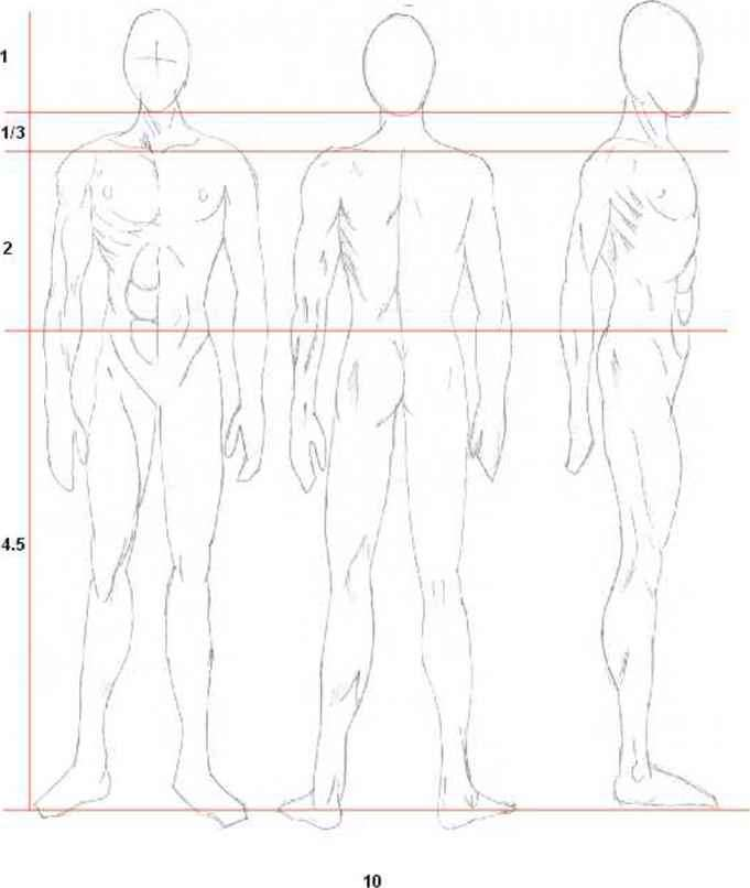 Male Anatomy Drawing