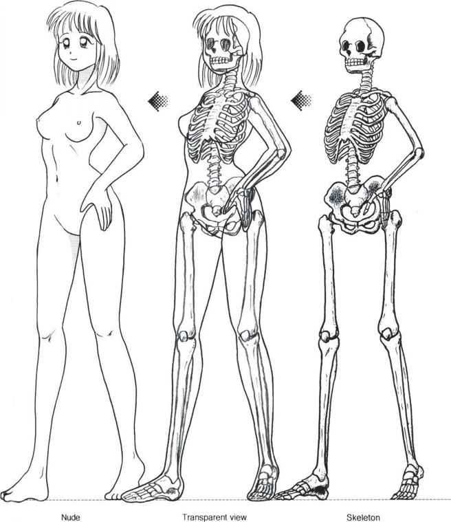 Human Body Female