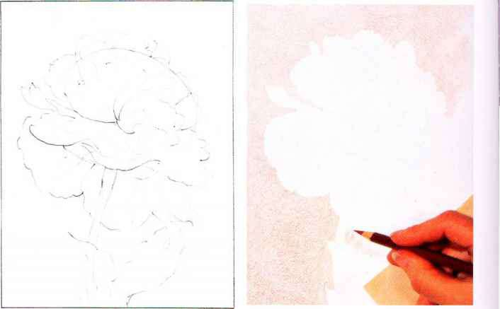 Artist That Draw Flowers Pencil Tone