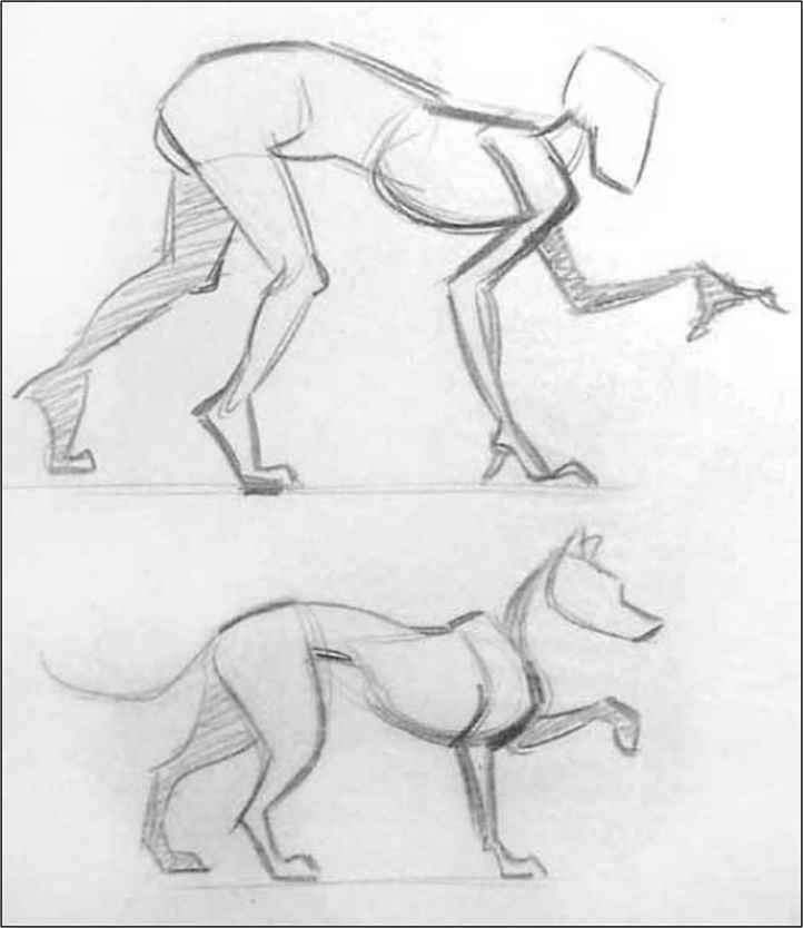 Comparative anatomy - Drawing Life - Joshua Nava Arts