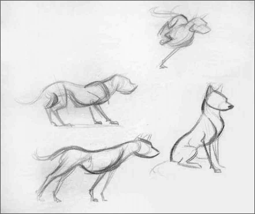 Dogs Body Drawing