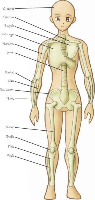 Cartoon Bones And Muscles Images