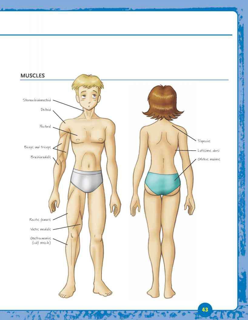 Anatomy Manga Drawing Joshua Nava Arts