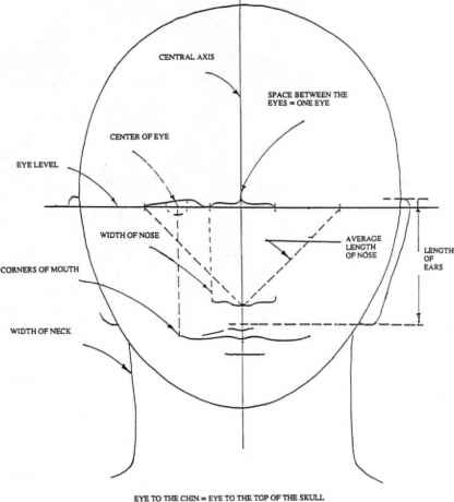 General Proportions The Human Head