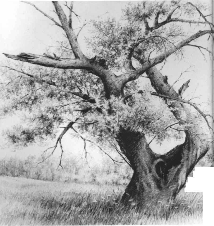 Tips On Storing And Framing Your Drawings - Drawing Nature