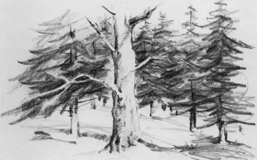 Open Field And Woods Drawing