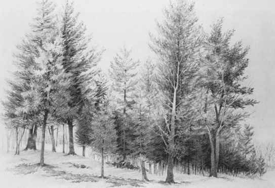 Pencil Drawing Outdoors