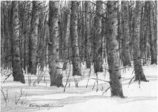 Nature Drawing Picture Without Color