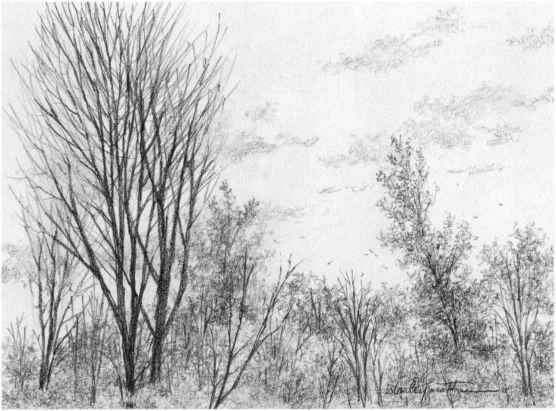 Drawing nature pencil shading