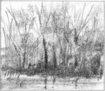 Pencil Sketches Nature