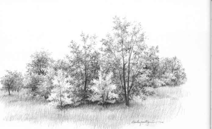 Nature Sketches