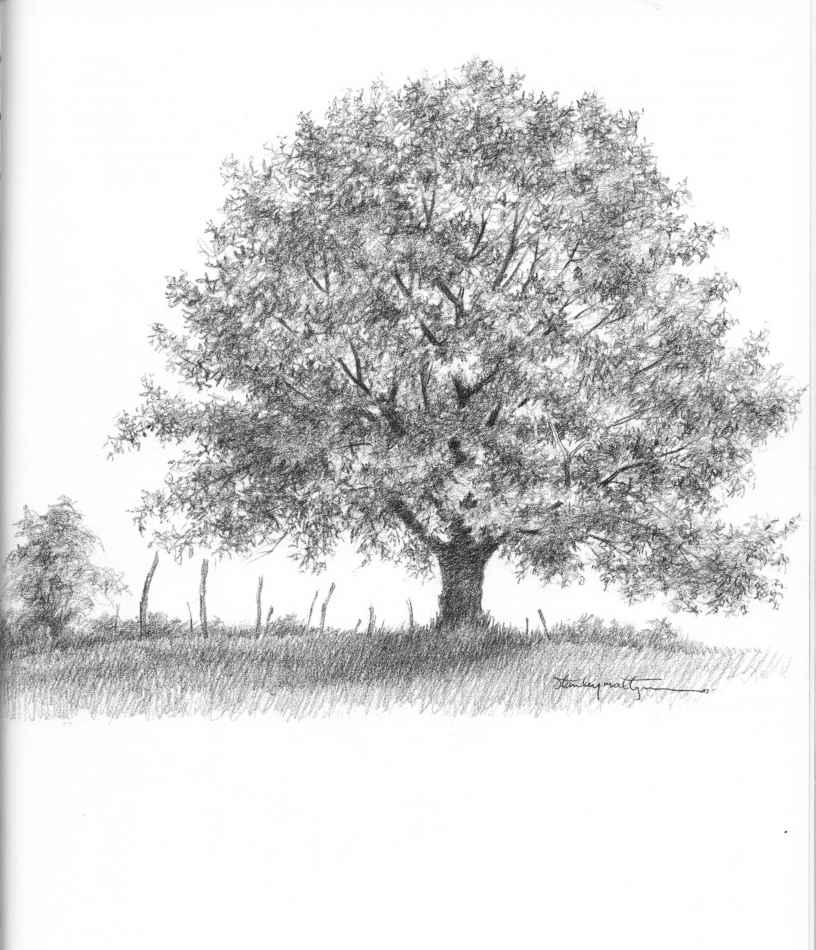 how to draw realistic leaves on a tree
