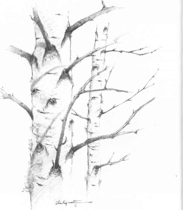 simple tree drawings