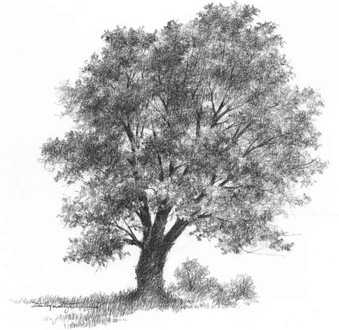 Gallery For gt Simple Tree Drawings In Pencil