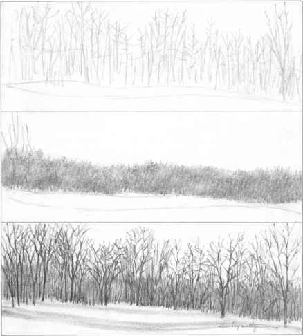 Landscape Drawing With Trees