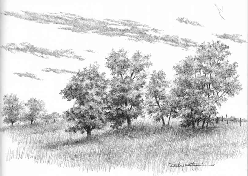 Perspective tree drawing draw pine foliage