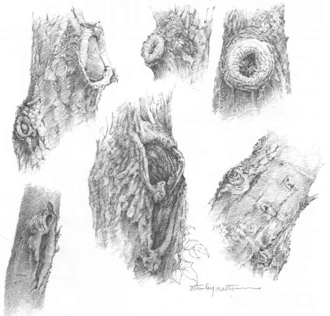 Tree Bark Patterns Drawing