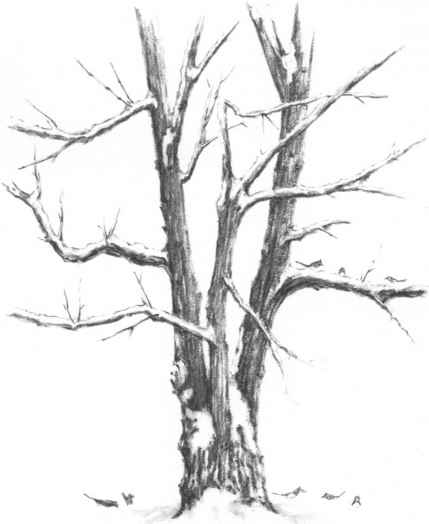 Mountains With Snow And Trees - Drawing Nature - Joshua ...