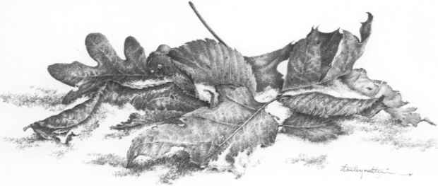 Winter leaves ii 18 x 22 graphite pencil on whatman paper