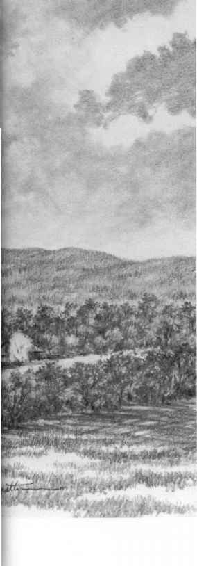 Drawing Nature Graphite Pencil
