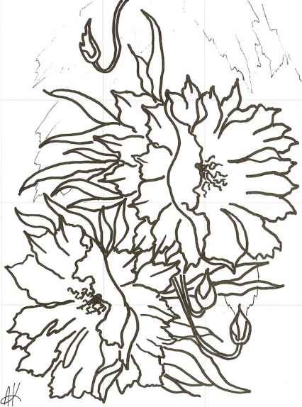Night Blooming Cereus Flowers Drawing