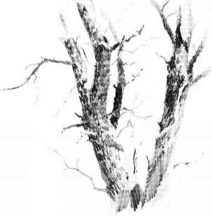 Drawing Tree Trunk Texture