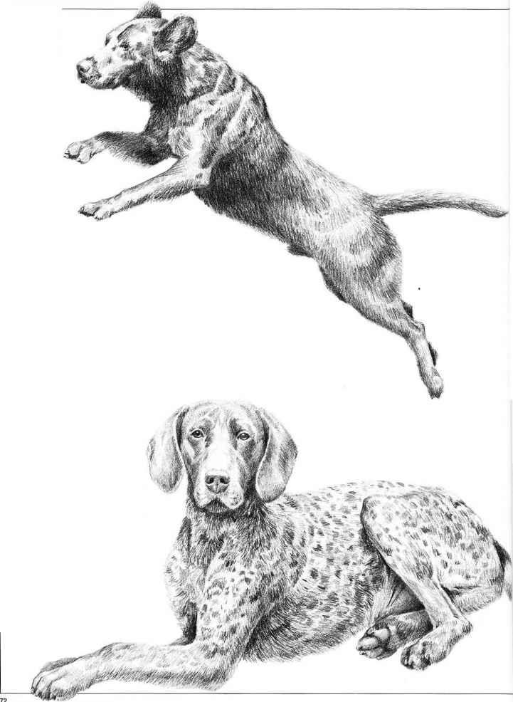 Drawing Dogs - Pencil Drawing - Joshua Nava Arts