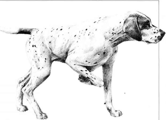 Drawing Dogs Pencil Drawing Joshua Nava Arts