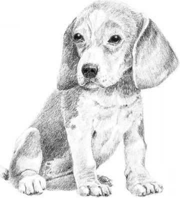 Drawing dogs easy pencil drawings fairies