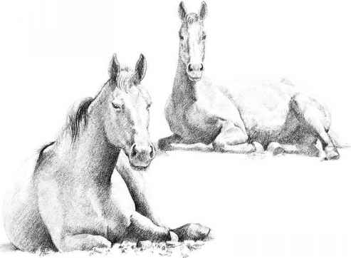Pencil drawing horses