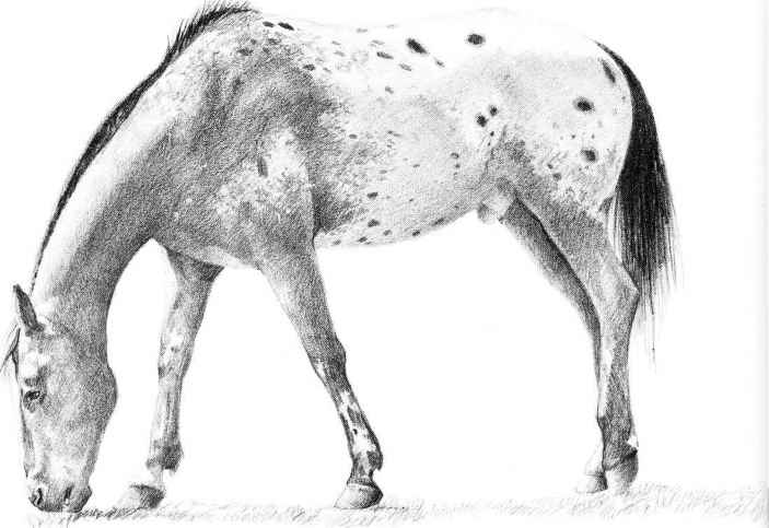 How To Draw A Realistic Horse