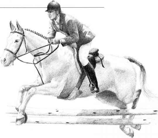 Horses Jumping Drawings