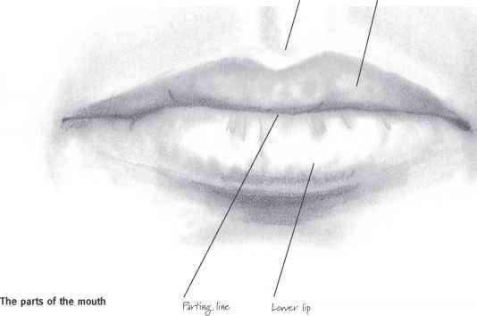 Line drawing lips : Parts of the mouth drawing realistic faces joshua nava arts