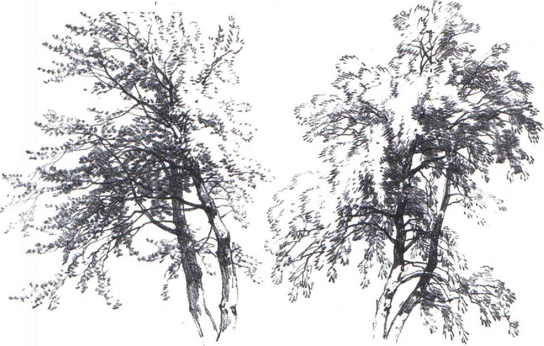 super heroes black and white sketches drawing trees and